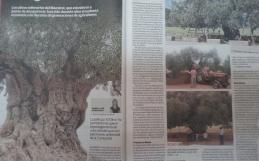Hoy Domingo 28 salimos en el Diario Las Provincias.