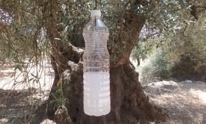 botella mosca